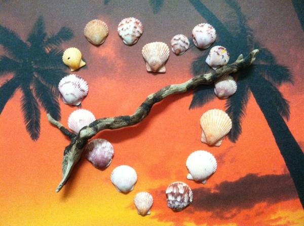shell_heart